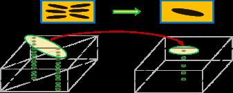 Tensortransformation.png